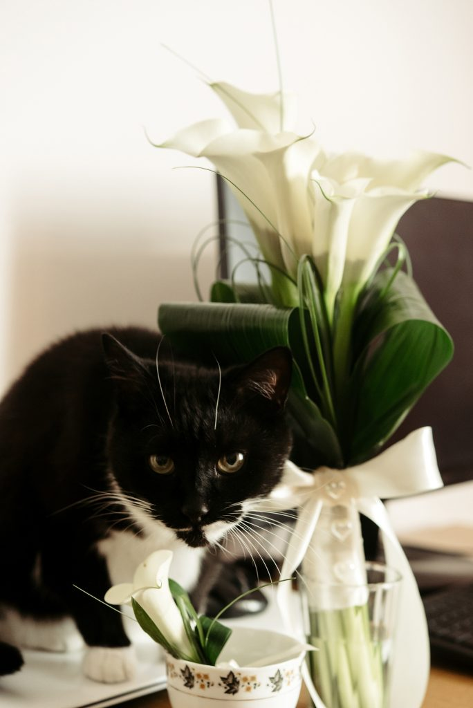 cute funny black and white cat with wedding luxury bouquet of ca