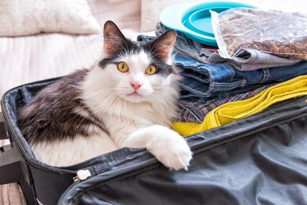 Cat pet hotel Orange County California