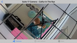 Club Cat Irvine Orange County cat boarding kennel