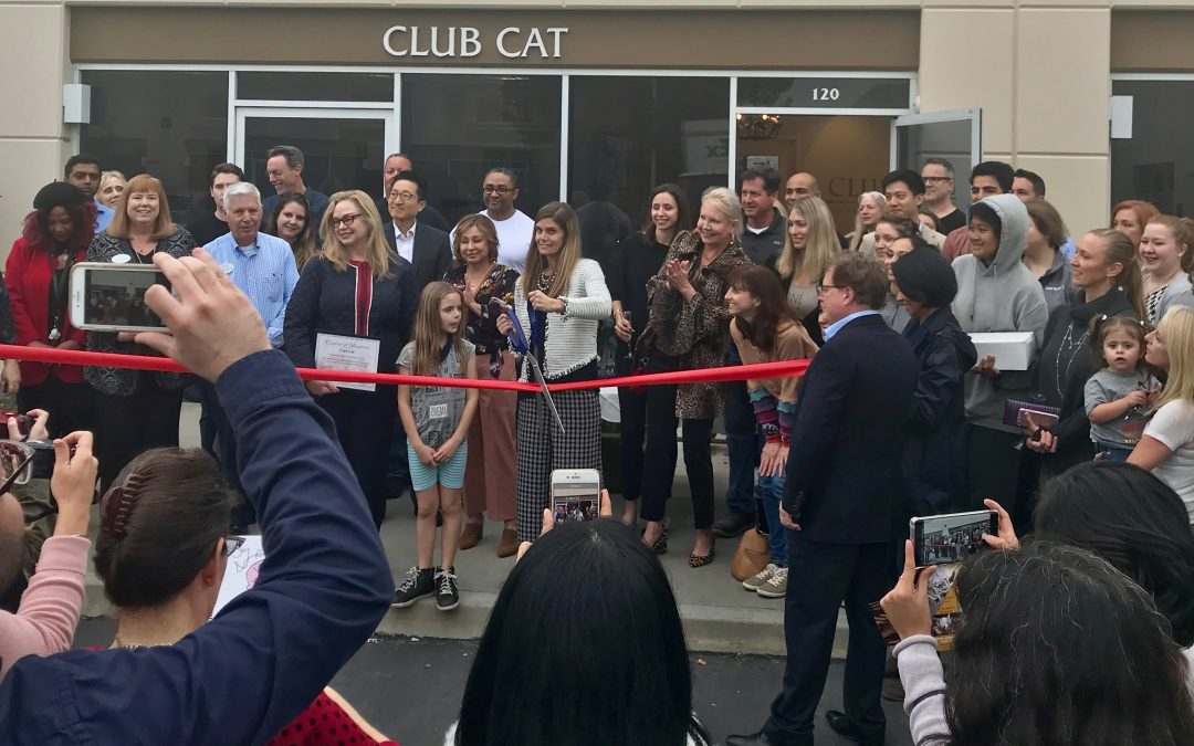 Club Cat, OC's first luxury cat hotel, celebrates Grand Opening