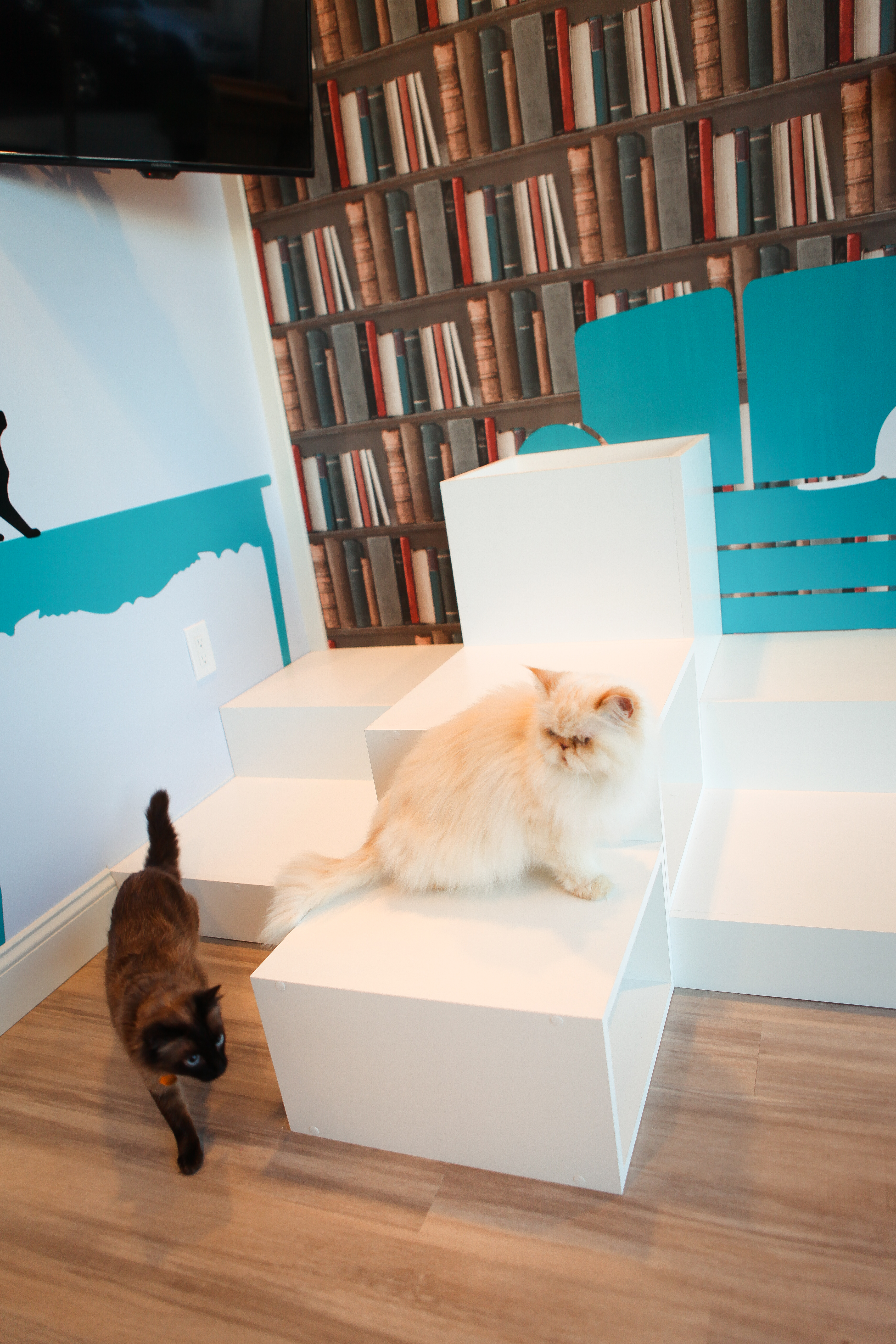 Gallery | Images Of Cats At Luxury Cat Hotel