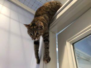 kitten boarding