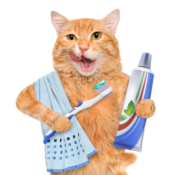 Have you brushed your cat's teeth lately?