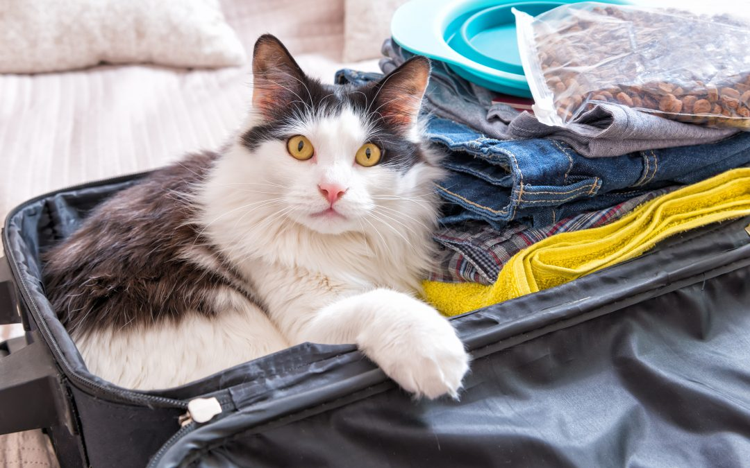 Are you prepared to evacuate your cat in an emergency?