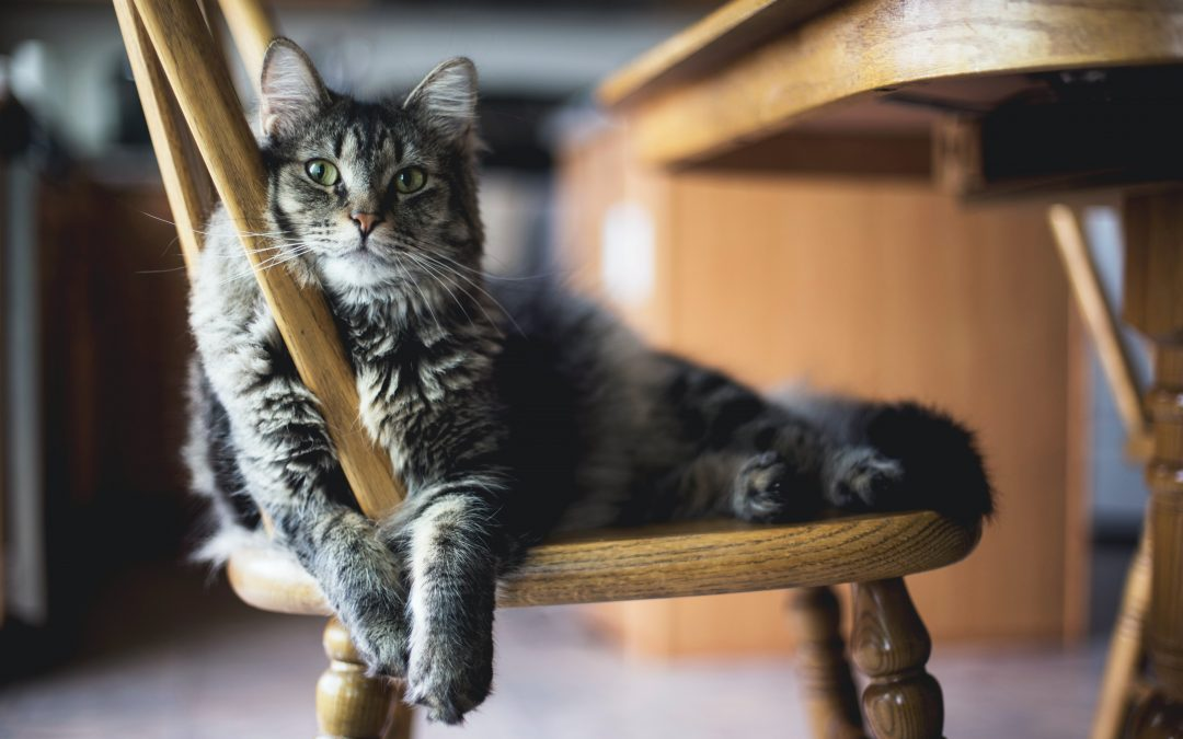 Is Overindulgence Harming Our Pets?