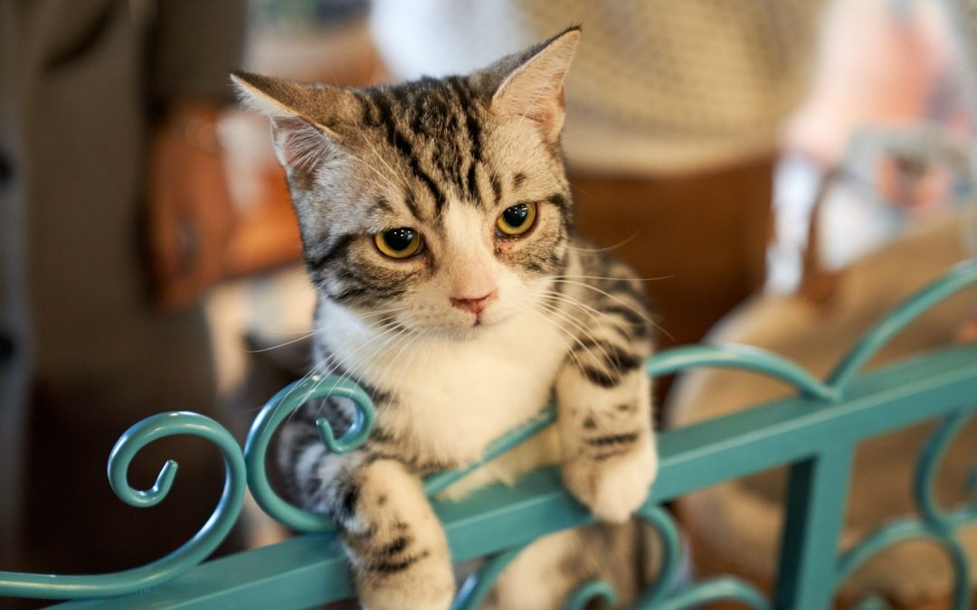 Signs Of Separation Anxiety In Cats And How You Can Help